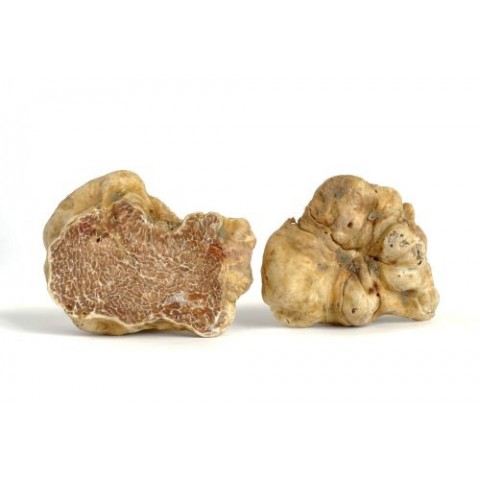 Truffes Blanches 1kg
